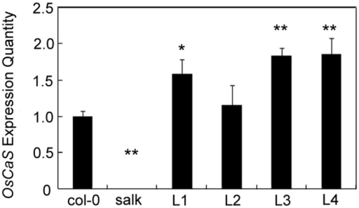 Detection of gene expression in transgenic plants by real-time PCR.Col-0 is the wild type; L1, L2, L3, and L4 represent OsCAS transgenic plants under the control of the CaMV 35S promoter; and Salk is the T-DNA insertion mutant. Mean and SE values were determined using at least three independent experiments. Significant differences from Col-0 control plants after drought treatment were determined by the t-test. * p < 0.05 and ** p < 0.01.