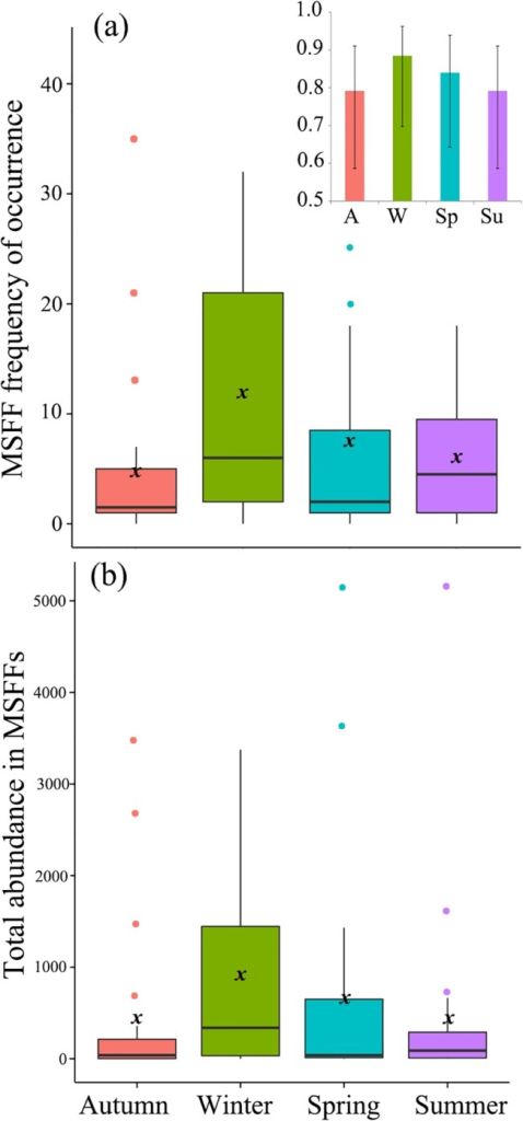 Box-plot of seasonal variation of MSFF attributes at Valparaiso Bay.(a) MSFF frequency of occurrence (MSFFs observed per month) and (b) MSFF abundance (total number of individuals observed in MSFFs per month). Insert (4a top) shows the monthly probability (± 95% confidence interval) of observing MSFFs per season (GLM, binomial structure). x shows the mean.