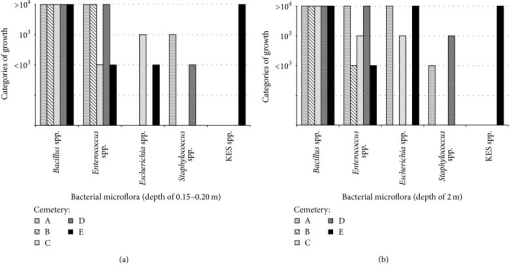 (a) The presence of bacterial microflora in the soil of burial at a depth of 0.15–0.20 m collected from the five necropolises (A–E). (b) The presence of bacterial microflora in the soil of burial at a depth of 2.0 m collected from the five necropolises (A–E). BS: Bacillus spp., EnS: Enterococcus spp., EsS: Escherichia spp., KES: Klebsiella spp., Enterobacter spp., and Serratia spp., StS: Staphylococcus spp.