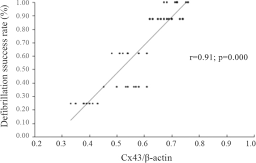 Correlation between Cx43 expression and defibrillation success rate. Cx, connexin.