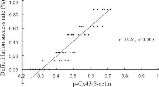 Correlation between the expression of p-Cx43 and the success rate of first three defibrillations. p-Cx43, phosphorylated connexin43.