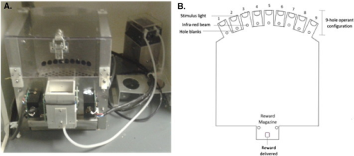 A. Picture of the mouse operant boxes used in behavioural testing. B. Schematic representation of the operant box apparatus, the back response wall contained 9 stimulus lights, 5 of which were used in operant testing. Holes 1, 3, 5, 7 and 9 contained stimulus lights and photocell detectors to detect nose pokes via breaking of an infrared beam, these correspond to holes A, B, C, D and E. Holes 2, 4, 6 and 8 were covered with well blanks. Each nose poke contained a stimulus light and an infrared beam to detect nose poke responses.