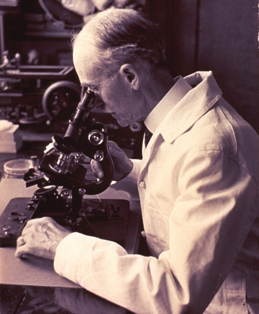 <p>A photograph of Dr. Edward R. Baldwin, seated, left profile, looking into a microscope.</p>