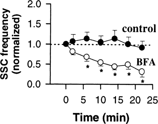 Effect of BFA on  ACh does not involve the cell  body. The axon was transected  with a sharp microelectrode in  the vicinity of the cell body as  in Fig. 4. Myocytes were manipulated into contact with the  middle of axonal fragment 15  min after transection, the time  when the SSC frequency returns to control (before transection) values (time 0 on the plot).  Spontaneous neurotransmitter secretion was measured for ∼25  min by patch clamp recordings from the myocytes (control). The  average SSC frequency was calculated for 3-min intervals and  normalized to the SSC frequency at time point 0 (solid circles).  Bath application of BFA (10 μg/ml) 5 min after the start of recording resulted in a decrease in the SSC frequency (open circles). Each bar represents the average of 10 experiments ± SEM.  *, P < 0.05, ANOVA.