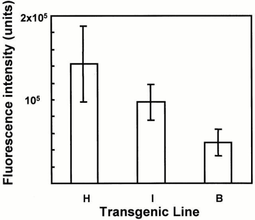 Three independent lines of TdtL mice exhibit different levels of Tdt expression as determined by measuring the intensity of nuclear immunofluorescence. The level of fluorescence of individual fetal liver cells was calculated as explained in Materials and Methods and is expressed as arbitrary units on the y axis. The standard deviation expressed as error bars on each column represents actual differences in the intensity and size of cell nuclei. Overall, line B stained two- to threefold less than did lines H and I.