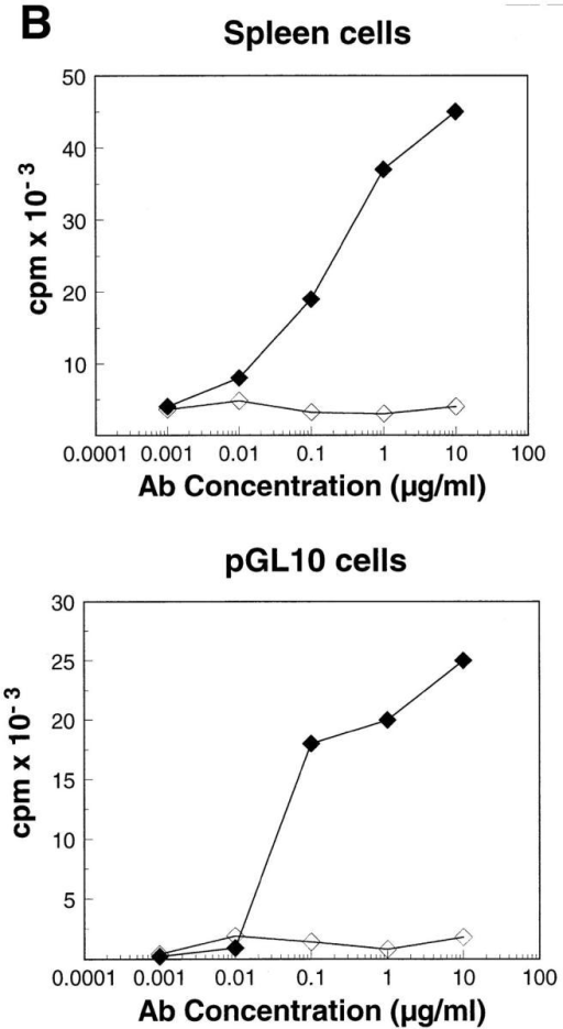 Stimulation with anti-CD3 × anti-CD4 heterodimer results  in increased phosphorylation of proteins associated with the TCR complex and reconstitutes a mitogenic stimulus. (A) 107 pGL10 T cells were  stimulated with the anti-CD3–Fos F(ab)′2, or the bispecific F(ab)′2 (antiCD3 × anti-CD4) for 5 min at 37°C. Samples were precipitated with  anti-ζ, and blots were probed with anti-phosphotyrosine as in Fig. 2 A.  (B) Whole spleen (top) or pGL10 T cells (bottom) were cultured with serial  log dilutions of anti-CD3–Fos homodimer (open diamonds) or bispecific  anti-CD3 × anti-CD4 (closed diamonds) for 48 h. Data is representative of  two (A) and three (B) separate experiments.