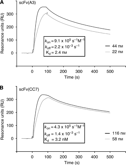 Biacore analysis of purified monomeric scFv preparations injected at different concentrations. (A) Binding of scFv(A3) and (B) scFv(CC7) to the extracellular CA domain of CA IX. Kinetic constants were calculated with the BIA evaluation 4.1 software.