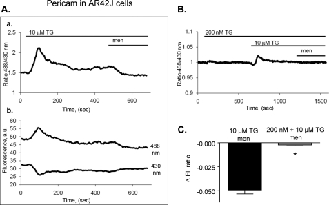 Menadione can induce release of calcium from mitochondria of AR42J cells (pericam measurements). AR42J cells were transfected with fluorescent mitochondrial ratiometric calcium pericam. Fluorescence was measured over time before and after menadione in cells pretreated for 10 min with 10 μm thapsigargin (A) or for 10 min with 200 nm and subsequently with 10 μm thapsigargin (B). The ratio of pericam fluorescence is shown in Aa and B, while original traces of pericam fluorescence (488 nm and 430 nm excitation) are shown in Ab. The change in fluorescence after menadione treatment under each condition (A and B) was compared (C) (mean ± S.E., n = 8–11 per group, *, p < 0.05).
