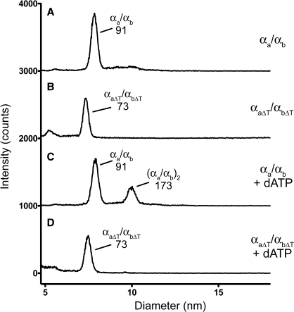 The mutant αaΔT/αbΔT heterodimer is defective in dATP-mediated dimerization. Shown are representative GEMMA analyses of the αa/αb or αaΔT/αbΔT heterodimers with no added nucleotide (traces A and B), or with 50 mM dATP (traces C and D). The concentration of the αa/αb heterodimer was 0.01 mg/ml (0.11 µM) and the concentration of the αaΔT/αbΔT heterodimer was 0.04 mg/ml (0.47 µM). For each condition, the composition and predicted sizes (in kDa) of the species are indicated. The baseline has been shifted by 1000 intensity counts for each trace.