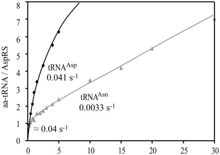 Aminoacylation kinetics for tRNAAsp and tRNAAsn with Hp ND-AspRS: a dual response to substrates. Experiments were conducted in 15% glycerol at 4°C for tRNAAsp (black diamonds) and tRNAAsn (gray triangles). Results show that tRNAAsp and tRNAAsn are aminoacylated differently. In case of tRNAAsp, the first cycle (1 Asp-tRNA formed) has the same rate as the subsequent ones (0.04 s−1). However, in case of tRNAAsn, the first cycle (0.04 s−1), which is equivalent to that for tRNAAsp, is significantly faster than the subsequent ones (0.0033 s−1). Extrapolation of this slower phase at t0 points to the formation of 1 Asp-tRNAAsn per ND-AspRS active site. This pattern suggests a rate-limiting step which would be the release of Asp-tRNAAsn. SE was <5% on all values.