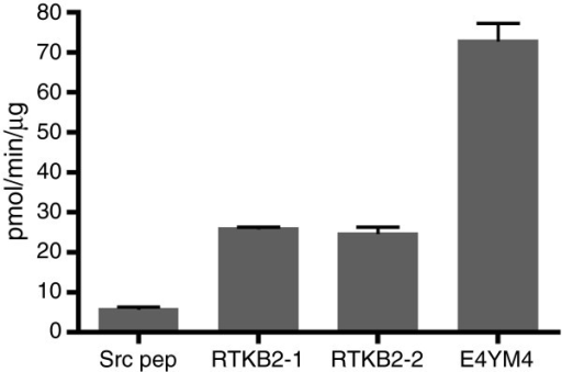Peptide phosphorylation by purified RTKB2 kinase. The enzymatic activity of RTKB2 (1 μM) towards four synthetic peptides (750 μM) was measured using the phosphocellulose paper binding assay. Reactions were carried out for 15 minutes at 30°C. Error bars indicate standard deviations.