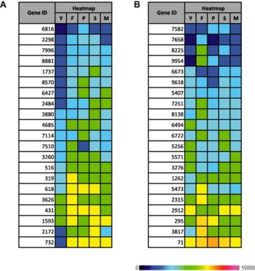 Heat maps for selected P. carnosa transcripts coding for CytP450 (A) and GSTs (B), during growth on YMPG (Y) or medium containing wood from fir (F), pine (P), spruce (S) or maple (M), as determined by mRNA-Seq. The colour scale represents the reads per kilobase of gene model per million mapped reads. The figure has been adapted from MacDonald and colleagues (2011).