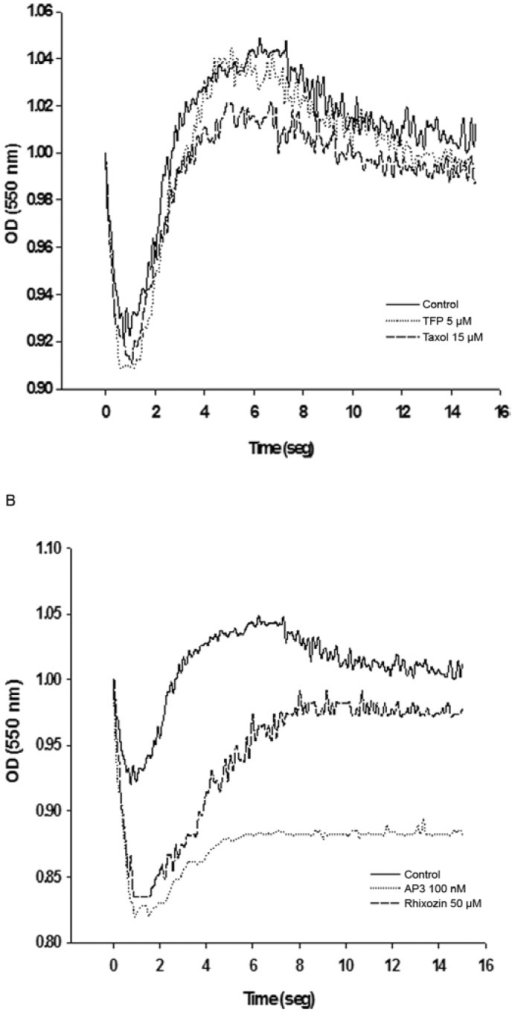 regulatory volume decrease in Leishmania mexicana promas tigotes after anti-microtubule (Mt) drug treatment. Relative changes in cell volume of parasites cultured in the absence or presence of the drugs were followed by monitoring absorbance at 550 nm. Traces fol lowed by control, trifluoperazine (TFP) and taxol treated cells (A) and cells treated with rhizoxin and ansamitocin P3 (AP3) (B). Results are representatives of those obtained from five independent experiments and are expressed in arbitrary absorbance units. OD: optical density.