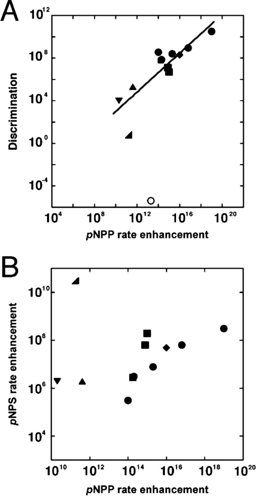 Analysis ofrelative rate enhancements for cognate reactions withtheir ability to discriminate between phosphate and sulfate estersubstrates. (A) Correlation of the enzymatic rate enhancement of pNPP hydrolysis with the extent of catalytic discriminationbetween pNPP and pNPS hydrolysisby AP superfamily members and PTPs. Data are from results herein andprior studies and are summarized in Table S1, Supporting Information. The linear least-squares fit has aslope of 0.9 log units (R2 = 0.74). Key:circles for AP and mutants thereof; diamond for PafA; squares forPTPs; triangle for PAc; inverted triangle for NPP; right angle trianglefor PMH; open circle for PAS. See Table S1, SupportingInformation, for enzyme abbreviations. The data point for PASwas not included in the fit because this enzyme prefers to hydrolyze pNPS over pNPP. (B) Plot of the enzymaticrate enhancement of pNPP hydrolysis with the enzymaticrate enhancement of pNPS hydrolysis by AP superfamilymembers and PTPs (excluding the AP superfamily member PAS). Key: sameas in panel A). The data point for PAS is omitted to allow bettervisualization of the other data points but is included in an analogousplot in the Supporting Information (FigureS8).
