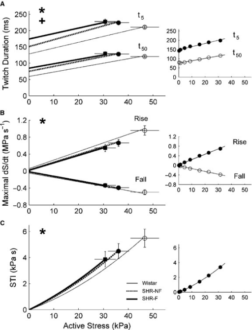 Kinetics of isometric contractions at steady states. (A) Twitch durations at 5% (t5) and at 50% (t50) of peak stress as functions of active stress. (B) Maximal rate of rise (+dS/dt) and rate of fall (−dS/dt) of active stress, computed, respectively, from the ascending and descending limbs of the twitch, were plotted as functions of active stress. (C) Stress‐time integral (STI; the area under the twitch) as a function of active stress. *P < 0.05 for Wistar versus both spontaneously hypertensive rat (SHR) groups, +P < 0.05 for failing SHR (SHR‐F) versus nonfailing SHR (SHR‐NF). Data (mean ± SE) at Lo were superimposed on appropriate panels to demonstrate variability of each average regression line. The insets show data from a representative SHR‐NF trabecula.