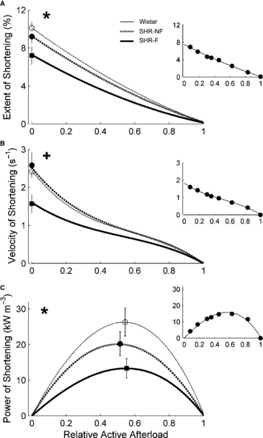Shortening kinetics obtained from work‐loop contractions. (A) Maximal extent of shortening (calculated from the end‐systolic length in Fig. 4C), (B) maximal velocity of shortening (at the times indicated by the circles in Fig. 4B), and (C) maximal power of shortening (calculated as the product of maximal velocity of shortening and active afterload, where active afterload is afterload minus peak passive stress), as functions of relative active afterload. *P < 0.05 for Wistar versus both spontaneously hypertensive rat (SHR) groups, +P < 0.05 for failing SHR (SHR‐F) versus nonfailing SHR (SHR‐NF). Peak values (mean ± SE) of variables were superimposed on appropriate panels as an indication of the variability of each average regression line. Note that the greatest SE occurred at peak values. The insets show data from a representative SHR‐F trabecula.