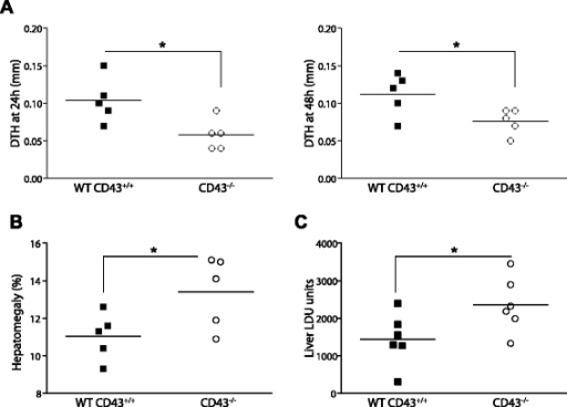 CD43 deficient mice are susceptible to visceral leishmaniasis. CD43+/+ and CD43−/− mice on a C57BL/6 background were intravenously injected with 5 × 10 7 amastigotes of Leishmania (L.) infantum chagasi, and 30 days after infection the clinical signs of disease were examined. (A) Infection in CD43-deficient mice results in an impaired DTH response. The vertical axis in the histogram represents the individual values of the thickness of the skin reaction in mm 24 h and 48 h after intradermal injection of 107 freeze–thawed stationary phase promastigotes at 30 DPI. Controls with saline were done by contra-lateral injection and their values were subtracted from the reaction promoted by Leishmania antigen. (B) Liver/body relative weights are increased in infected CD43-deficient mice. The body weight was measured in grams at day 30 and the liver/body relative weights (grams of organ weight × 100 / grams of body weight) were determined in CD43+/+ and CD43−/− mice. (C) Increased parasite burden in the liver of CD43-deficient mice. The vertical axis in the histogram represents the average liver parasite load in Leishman-Donovan units of Stauber (LDU = number of amastigotes / 1000 cell nuclei × organ weight in mg) obtained at 30 DPI. Data are means ± SE and represent the results of three independent experiments performed with 5–6 mice per treatment. Differences between groups are significant *(p < 0.05).