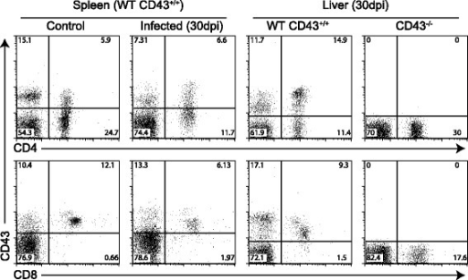 Expression of CD43+T cells defines major intrahepatic CD4+and CD8+T cell subsets during visceral leishmaniasis. Following infection of CD43+/+ and CD43−/− mice with 5 × 107amastigotes of Leishmania (L.) infantum chagasi, spleens and livers were collected at 30 DPI for FACS analysis. Splenocytes and mononuclear cells purified from livers were analyzed by FACS after staining with anti-CD43-FITC, anti-CD8-APC and anti-CD4-PE. Plots represent CD43+CD8+ and CD43+CD4+ lymphocyte pools derived from five mice. The values in the corners represent mean percentages of CD43+ cells in the total CD4+ or CD8+ T cell populations. Non-infected mice were used as controls. These data are representative of three independent experiments, using five mice per group.