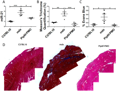 Reduction in cardiac pathology as determined by the detection of fibrosis and sarcolemmal damage in the hearts of exercised mdx mice following Pip6f-PMO treatment.(A) RT-qPCR analysis of miRNA-21 in heart tissue normalised to C57BL/10 cohort. (B) Quantification of Masson's trichrome staining in hearts of exercised cohorts. (C) Evans blue dye infiltration into heart following exercise. (D) Masson's trichrome images of worst areas of collagen deposition. miRNA-21 expression and Evans blue dye leakage of Pip6f-PMO hearts is normalised in contrast to untreated control. In addition Masson's trichrome staining is reduced and the representative images indicate less fibrosis then the untreated mdx cohort. Statistical significance was determined using ANOVA followed by Tukey post-hoc test (*** = P < 0.001, ** = P < 0.01, * = P < 0.05).