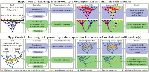 Two hypotheses for how neural modularity can improve learning.Hypothesis 1: Evolving non-modular networks leads to the forgetting of old skills as new skills are learned. Evolving networks with a pressure to minimize connection costs leads to modular solutions that can retain old skills as new skills are learned. Hypothesis 2: Evolving modular networks makes reward-based learning easier, because it allows a clear separation of reward signals and learned skills. We present evidence for both hypotheses in this paper.