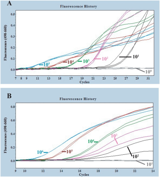 Amplification curves of reverse-transcription PCR on transcribed Ebolavirus RNAs and blood samples spiked with transcribed RNA.A: The different concentrations of transcribed Zaire ebolavirus RNA (105, 104, 103, 102, 101, 100 /10μl) were detected with the one-step reverse transcription FRET-PCR described in this study, and the detection limitation was 10 copies per reaction system. B: Serial concentrations of transcribed Zaire ebolavirus RNAs (106, 105, 104, 103, 102, 101/10μl) were spiked into human whole blood and were extracted with RNA purification kit, followed by the one-step reverse transcription FRET-PCR established in this study. The detection limitation was 100 RNA copies per reaction, equivalent to 320 copies of Zaire Ebolavirus in 1 ml whole blood. Triplicates (A) or duplicates (B) were performed for each concentration of tested Ebolavirus RNA.