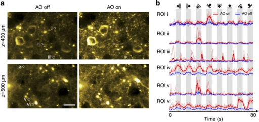 AO correction via direct wavefront sensing improves functional calcium imaging deep inside the cortex of a living mouse.(a) Calcium responses evoked by drifting-grating stimulation 400 and 500 μm below pia in the primary visual cortex of a mouse (Thy1-GCaMP6s line GP4.3) before (left panel) and after (right panel) correction. Brightness of each pixel reflects its s.d. across 800 frames imaged during five repetitions of the drifting-grating stimulus set, and is correlated with the local calcium transient magnitude. Scale bar, 20 μm. (b) Calcium transients at regions of interest (ROI) i–vi, before and after AO correction. Solid colours label averaged transients; faded colours label transients during specific repetitions. Top panel indicates the orientations and drifting directions of the grating stimuli. Representative images from >20 imaging sections in three mice.