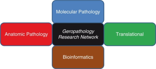 The Geropathology Research Network carries out its aims and objectives with four working groups: Molecular Pathology, Translational, Anatomic Pathology, and Bioinformatics.