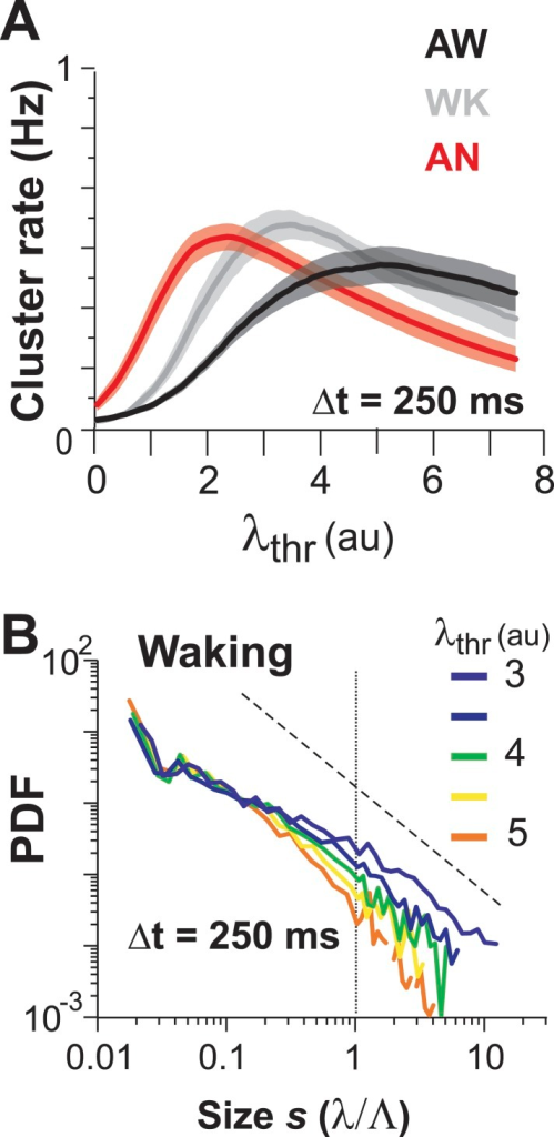 (A) Maximum cluster rate is observed at intermediate threshold levels for all three conditions.(B) Average cluster size distributions as a function of λthr for WK.DOI:http://dx.doi.org/10.7554/eLife.07224.011