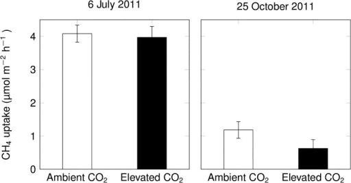 Net CH4 uptake rates of intact soil cores collected in ambient and elevated CO2 plots and incubated in the laboratory at 20°C (mean ± s.e., n = 3 per CO2 treatment; effects of elevated CO2 were not statistically significant).