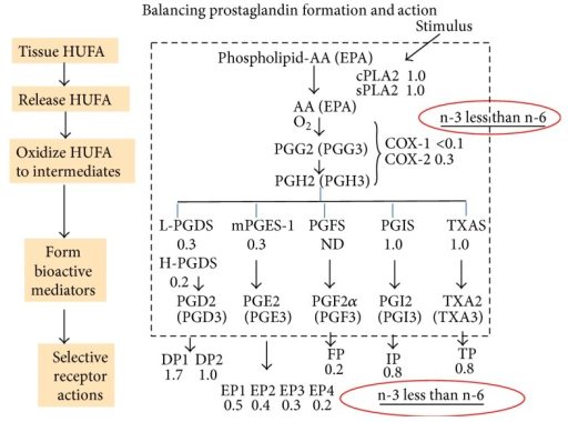 Balancing prostaglandin formation and action. The prostaglandin part of the arachidonic acid cascade begins with a stimulated phospholipase A2 releasing precursor HUFA from membrane phospholipids. The relative intensity of reaction for n-3 and n-6 mediators is shown as a ratio next to the interacting enzyme or receptor.