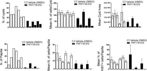 In vivo treatment of Cdh16Cre::Tfebfs mice with the WNT inhibitor PKF118-310 partially rescues cystic and neoplastic phenotypes.Measurements of different parameters related to the cystic and papillary phenotype on six animals treated with vehicle (DMSO) and six animals treated with drug (PKF118-310). Values are shown as means (± SEM) when appropriate and are represented separately for each animal.DOI:http://dx.doi.org/10.7554/eLife.17047.019