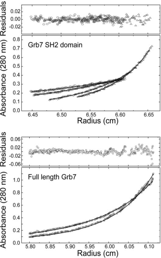 Sedimentation equilibrium analysis of the Grb7 SH2 and Grb7. (a) Absorbance at 280 nm verses radius data at sedimentation equilibrium for Grb7 SH2 at an initial loading concentration of 36 μM. The data collected at 14,000 rpm (circles), 16,600 rpm (squares), 24,300 rpm (diamonds) and 28,800 rpm (triangles) were fitted simultaneously using the nonlinear regression program [48]. (b) Absorbance at 280 nm verses radius data at sedimentation equilibrium for Grb7 at an initial loading concentrations of 12 μM. The data collected at 10,000 rpm (circles) and 11,800 rpm (squares) were fitted simultaneously using the nonlinear regression program NONLIN [77]. The solid line represents the calculated fit to a monomer-dimer model. The residuals of the fit are shown in the upper panels. Samples were in 50 mM MES pH 6.6, 100 mM NaCl and 1 mM DTT. The experiments were conducted at 20°C.