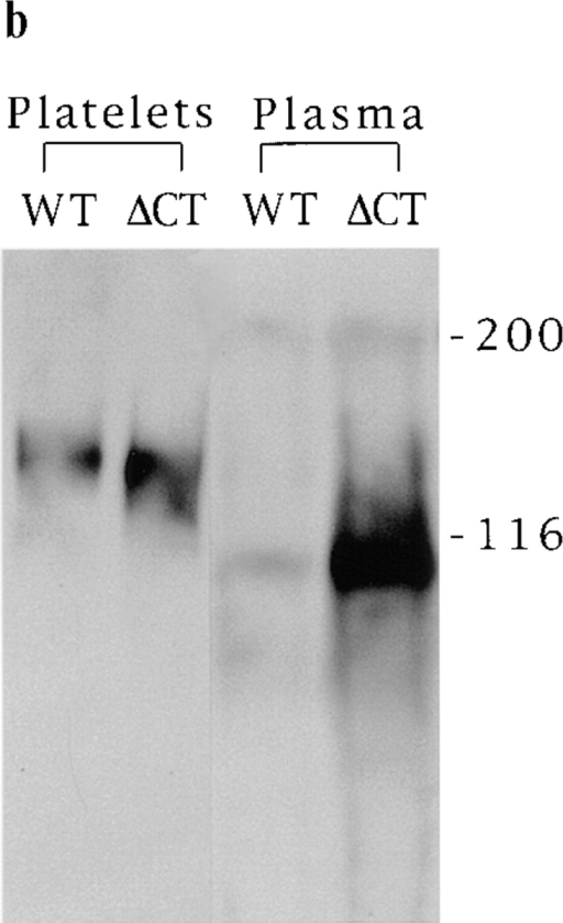 Presence of soluble P-selectin fragment in the plasma. Plasma samples  were collected from wild-type (WT), ΔCT, and P-selectin–deficient (P-KO) mice.  (a) Soluble P-selectin levels were determined using a sandwich ELISA. After subtracting the value of P-KO plasma, an average of fivefold increase in plasma  P-selectin was detected in ΔCT mice compared with the wild-type. (b) Western  blot analysis of plasma P-selectin. 10 μl of plasma or lysates from 5 × 107 platelets  was loaded in each lane. The blot was probed with a polyclonal antibody against  P-selectin. (c) Increased levels of soluble P-selectin in the plasma of wild-type  mice stimulated with LPS or TNF-α. Wild-type mice were injected intraperitoneally with LPS or murine recombinant TNF-α (both at 20 μg/g body weight) and  plasma samples were collected 4 h later. Plasma from P-KO mice was used to determine the background for the ELISA. The OD values shown were obtained after subtracting the value of P-KO plasma. *, P < 0.002 ; **, P = 0.02; n = 3 or 4.
