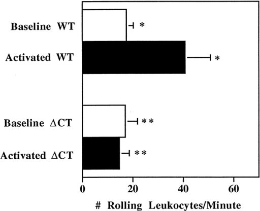 Analysis of leukocyte rolling in mesenteric venules.  Baseline rolling was recorded during the first 10 min after exteriorization of the mesentery. The number of rolling leukocytes was  quantified by counting the cells passing through a perpendicular  plane in 1 min. To examine leukocyte rolling on activated endothelium, A23187 was added to the exposed mesentery and leukocyte rolling was recorded for an additional 10 min. The data represent the mean of seven mice of each genotype at 4 wk of age. *,  P < 0.05; **, P = 0.71. A previous study (Mayadas, 1993) has  shown that the number of rolling leukocytes per minute in  P-selectin–deficient mice was minimal: <0.05 and 0.10 ± 0.06 for  resting and activated venules, respectively.
