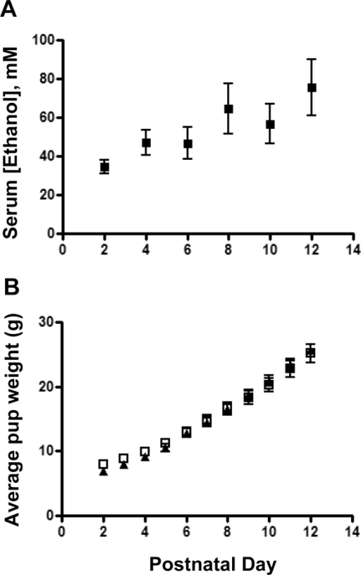 Moderate perinatal ethanol exposure does not affect pup weight.(A) Pup serum alcohol during the course of ethanol exposure between postnatal day 2 and day 12 (n = 6). (B) Ethanol exposure did not affect the weight of pups as assessed during postnatal day 2 to day 12. Control, solid triangles; ethanol, open squares; n = 9 litters per group.