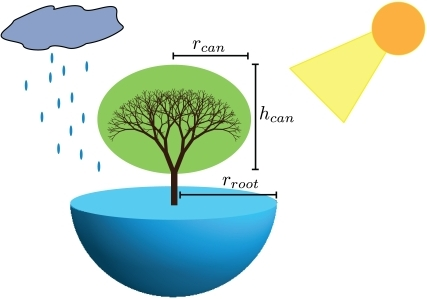 The size-based resource gathering capabilities of a tree.The above-ground canopy is shown in green and the below-ground root mass in blue. The essential dimensions of the tree are indicated, where  is the radius of the canopy,  is the height of the canopy, and  is the radius of the root mass. Each of these features scales with height, , where  [41],  and . The number of leaves scales as  [28]. The scaling of the canopy features determines the collection of solar radiation and the heat exchange with the atmosphere, which can be used to solve for . The rate of moisture absorption, , is related to the scaling of the root system and incoming precipitation. Please see Supplement S1 for a more detailed treatment of these scaling relationships along with derivations for the associated tree physiology.