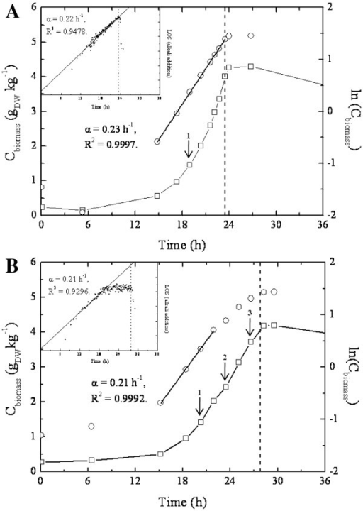 Growth profiles of one of the triplicate A. niger HacAWT (A) and HacA CA (B) batch cultures. Dry weight biomass concentration (gDWkg-1) as a function of time (h) illustrates the growth of the cultures. The maximum specific growth rate for each culture was determined from the slope (α) of the ln transformation of biomass (Cbiomass) in the exponential growth phase as a function of time (h), as well from log transformation of alkali addition as a function of time (h). Dash-line represents the end of the exponential growth phase (depletion of glucose). Arrows indicate time-points where mycelium was harvested for transcriptomic analysis.