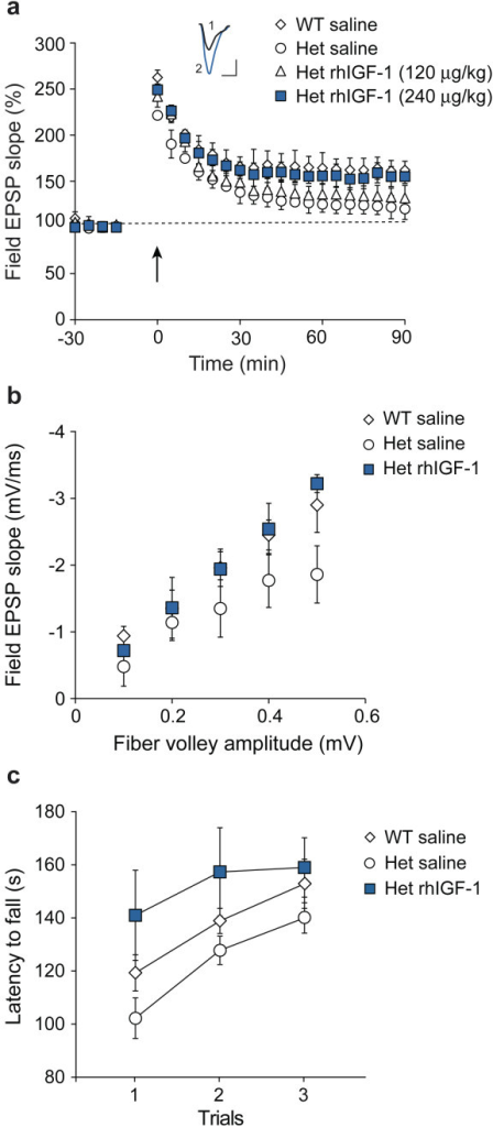 IGF-1 reverses deficits in LTP, AMPA signaling, and motor function in Shank3-deficient mice. Wild-type (WT) and heterozygous (Het) mice were treated with saline or recombinant human IGF-1 (rhIGF-1) for 2 weeks (beginning at PND 13 to 15) before testing and analyzed immediately after the last injection. Methods for all experiments were as described previously [5,7], with 4 to 9 mice per group. (a) Hippocampal LTP was induced with high-frequency stimulation. Inset: Representative excitatory postsynaptic potential traces at 90 min after LTP induction from saline-injected (1) and rhIGF-1-injected (2) heterozygous mice (scale bar: 0.5 mV, 10 ms). (b) Slices were incubated in the presence of the N-Methyl-D-aspartate (NMDA) antagonist R-2-amino-5-phosphonopentanoate (APV) to expose AMPA receptor signaling. (c) Mice were tested for motor performance and motor learning by measuring latencies to fall off a rotating rod over three trials. Het: heterozygous; LTP: long-term potentiation; NMDA: N-Methyl-D-aspartate; rhIGF-1: recombinant human IGF-1; WT: wild-type.