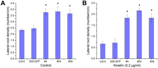 Overexpression of RcRR1 affects the density of lateral root in transgenic Arabidopsis.(A) Statistical analysis of the number of lateral roots (LR) per centimeter of the primary root from the wild-type and transgenic plants. (B) Statistical analysis of the number of LR in the wild-type and transgenic plants treated with 0.2 µg/ml kinetin. Asterisks in (A) and (B) indicate statistically significant differences (Student's t-test; P<0.01) between the control and transgenic plants; error bars show SDs.