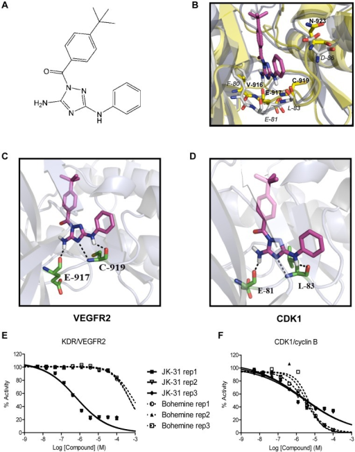 Dual targeting of VEGFR2 and CDK1.(A) Chemical structure of the aminotriazole-based compound JK-31. A full description of the chemical synthesis can be found in the Materials and Methods section. (B) In silico molecular modeling of JK-31 (magenta structure) in the VEGFR2 and CDK1 kinase domains. A homology model of CDK1 was created using a structurally-related family member (CDK2 PDB code: 3s2p). The CDK1 and VEGFR2 kinase domain sequences were aligned and overlapped. JK-31 was docked into the overlapped crystal structure using Glide program and important amino acid residues identified. VEGFR2 crystal structure is shown in yellow and residues annotated in bold; CDK1 crystal structure is shown in blue/grey and residues annotated in italics. (C) JK-31 was docked into a VEGFR2 crystal structure alone (PDB code: 3cjg) and predicted hydrogen bond contacts identified. (D) JK-31 was docked into the CDK1 crystal structure homolog alone and predicted hydrogen bond contacts identified. Dotted lines denote predicted hydrogen bond contacts. Green structures denote important kinase domain residues. Further details of these models can be found in Figure S2. (E–F) JK-31 inhibits the intrinsic kinase activity of both CDK1 and VEGFR2. IC50 curves were generated by incubating recombinant protein kinases with a peptide substrate, radiolabeled [γ-33P]-ATP and either JK-31 or bohemine (5 nM to 100 µM). Effects of JK-31 and bohemine on phosphate transfer from a (E) recombinant human VEGFR2 to a peptide substrate, poly[Glu∶Tyr] (4∶1) and (F) recombinant human CDK1/cyclin B complex to histone H1 substrate in vitro. Line graphs of three independent replicate experiments are shown.