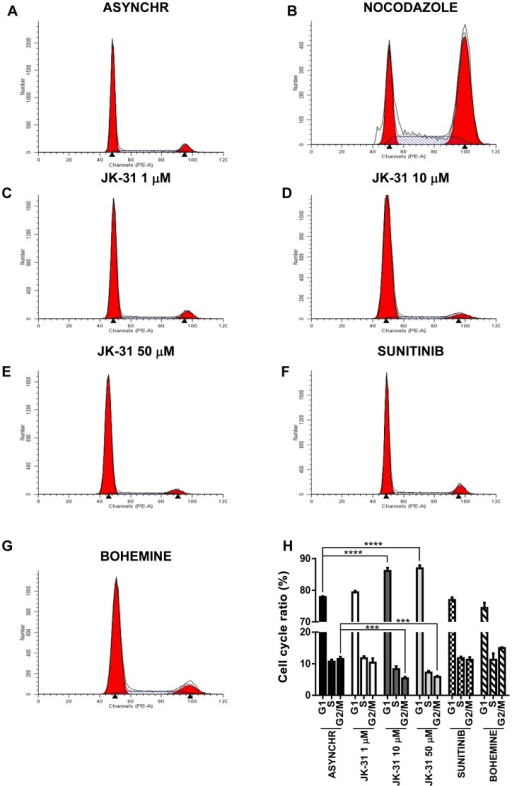 JK-31 inhibits cell cycle progression in endothelial cells.Endothelial cells were cultured in ECGM and treated with either (A) DMSO (ASYNCHR), (B) 200 nM nocodazole, (C) 1 µM JK-31, (D) 10 µM JK-31, (E) 50 µM JK-31, (F) 100 nM sunitinib or (G) 10 µM bohemine for 48 h, prior to staining with propidium iodide and assessment of DNA content using flow cytometry. (H) Quantification of cell cycle ratios after inhibitor treatment. Error bars represent ±SEM (n = 3). ***p<0.001; ****p<0.0001.