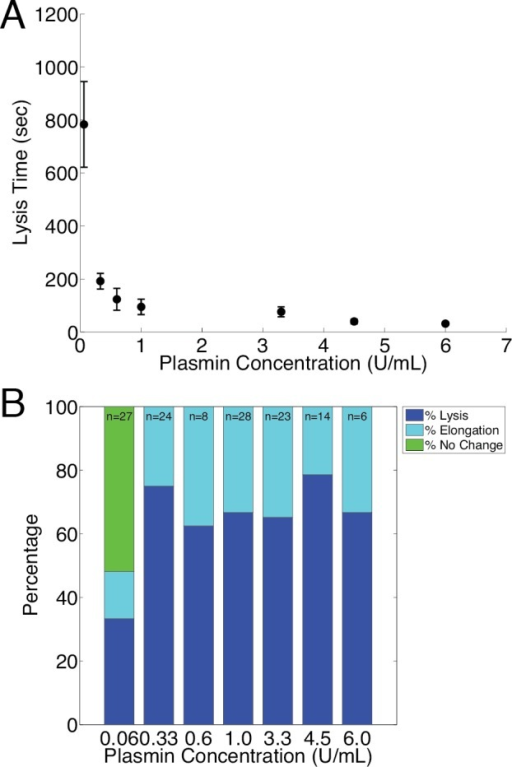Effect of Plasmin concentration on Lysis and Elongation.A The average time measured for single fibers to lyse after exposure to plasmin. Fibers exhibiting elongation were not counted in this analysis. B Percentage of fibers that exhibited lysis, elongation, and no change within thirty minutes after exposure to plasmin. Note that the ratio of the number of fibers that elongated to that of fibers that lysed remained constant across the range of plasmin concentrations. 'n' indicates the total number of fibers (lysed, elongated, no change) observed per plasmin dose.