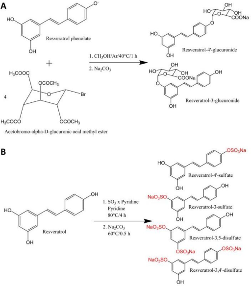Synthesis of resveratrol glucuronides (A) and sulfates (B).