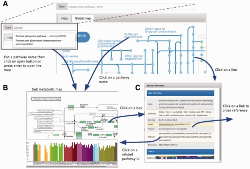 Summary of Atlas map viewer functions. (A) The main view of Atlas with control panel comprises a pathway input box for selecting specific sub metabolic map to be opened. The pathway input box provides an autocompleting search by pathway names. Atlas starts with a global metabolic pathway map by default. (B) Sub metabolic map with data overlaid and bar plot representing the number of genes that are present in this pathway map for each cell type can be opened by the control panel, clicking on pathway name in every map and clicking on pathway id in the information window. (C) The information window represents information of reactions from the KEGG database and provides link to external databases for further information.