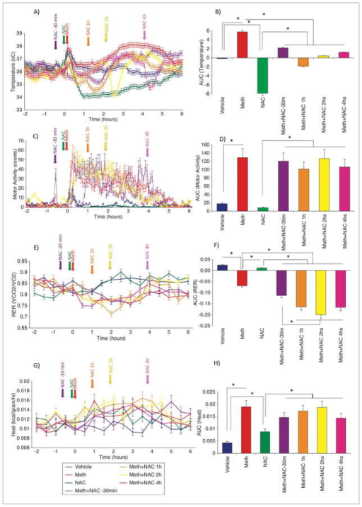 Effect of NAC on Meth hyperthermia, Motor activity and on RER. Mice were treated with NAC (1000 mg/kg) 30 min before, or 1, 2 or 4 hrs after Meth (5 mg/kg), and were monitored during 24 hours for Temperature and Respiratory Exchange Ratio. The figure shows the 6 hours in which the actions of Meth were observed. (A) Core body temperature, (B) Calculation of AUC for temperature, (C) Motor Activity, (D) AUC for Motor Activity. (E) RER, (F) AUC for RER, (G) Heat, extrapolated from CV and body mass and (H) AUC for Heat. Arrows indicate color-coded critical injection time-points. Red arrows indicate Meth injection (5 mg/kg), and colored arrows indicate NAC (1000 mg/kg) injection at indicated time-points. Baseline values for each variable were calculated by the average between −2 and 0, for determination of the AUC for a total of 6 hours, from time 0, using both positive and negative peaks. Values represent the Average ± SEM of one representative experiment with 5 mice/group, out of a total of 3 experiments performed. * p < 0.05.