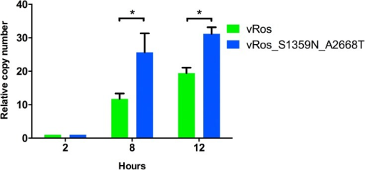 Replication kinetics of both reconstructed ancestral nodes.Replication of viruses in PK-15 cells was measured using RT-qPCR relative to 2 hour measurement at 8 and 12 hours after infection. Means ± s.d. are shown for biological replicates (n = 3). The replication rates of the two constructs was significantly different at both 8h (p = 0.003, t-test) and 12h (p = 0.008).