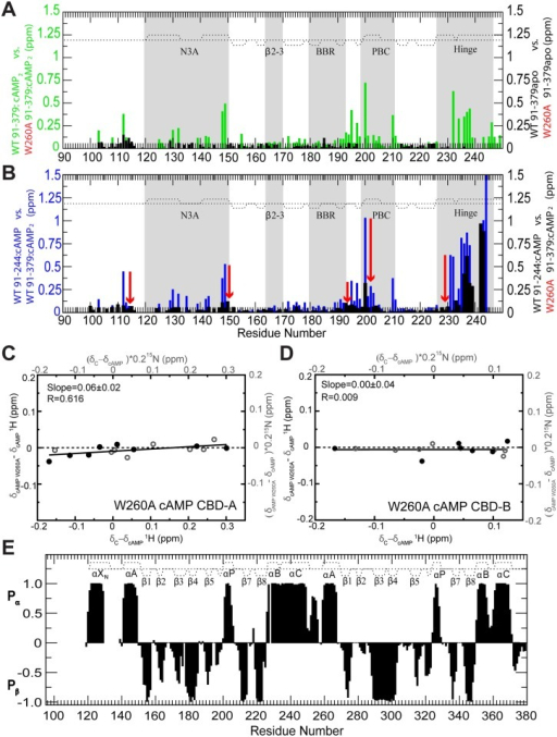 Probing CBD-A/B interactions in RIα (91–379) through the W260A mutation.Evaluation of the effect of the W260A mutation on the CBD-A/B interface through CCS differences in the apo and cAMP-bound states. (A) CCS changes caused by the W260A mutation in RIα (91–379) apo (black) or cAMP2-bound (green). (B) Plot of WT cAMP-bound RIα (91–244) versus WT cAMP2-bound RIα (91–379) CCS differences (blue) and plot of the WT cAMP-bound RIα (91–244) versus W260A cAMP2-bound RIα (91–379) CCS differences (black). The red arrows illustrate the effect of the W260A mutation. The comparison of the black and blue CCS difference profiles shows that the W260A mutation mimics the deletion of CBD-B. (C) Effect of the W260A mutation on the active versus inactive equilibrium of CBD-A, as assessed by chemical shift correlations, similarly to Fig 2D but with apo WT RIα (91–379) replaced by cAMP2-bound W260A RIα (91–379). (D) As in panel (C), but for CBD-B. (E) 2ary structure probability map based on the secondary chemical shifts of the W260A mutant RIα (119–379):cAMP2 (black bars). The 2ary structure profile of the WT:cAMP2 construct is reported as dotted lines.