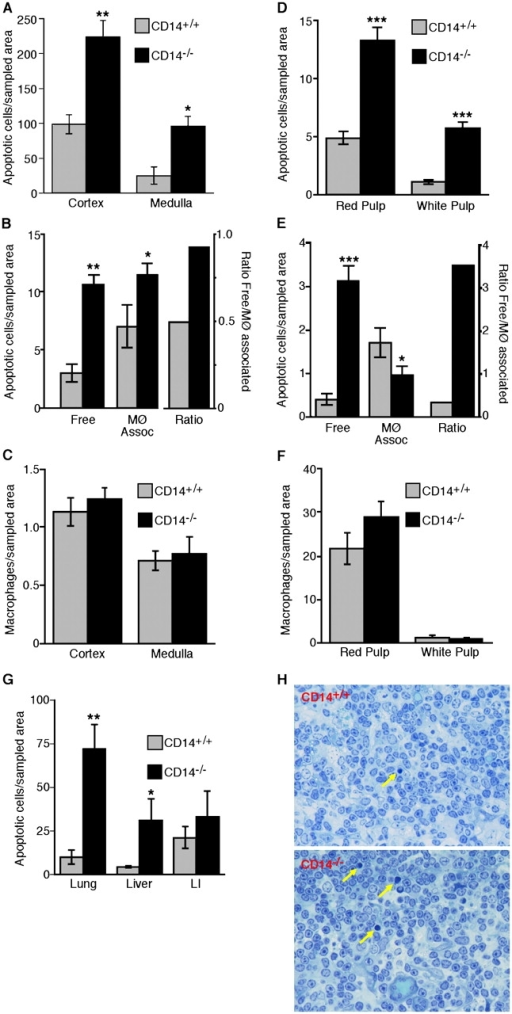 Persistence of apoptotic cells in tissues of normal CD14−/− mice. (A) Morphometric analysis of the frequency of ISEL+ nuclei present in the thymic cortex and medulla of CD14+/+ and CD14−/− mice. (B) Quantitative analyses of thymic sections showing the numbers of free and macrophage-associated apoptotic cells together with the ratios of free/macrophage-associated apoptotic cells for CD14+/+ and CD14−/− cortices. (C) Morphometric analyses of the distribution of macrophages (F4/80-reactive material) in the cortex and medulla of CD14+/+ and CD14−/− thymus. All thymus data shown are means ± SEM (n = 3 animals in each case). ANOVA: *, P < 0.05; **, P < 0.01. (D) Morphometric analysis of the frequency of ISEL+ nuclei present in the splenic red and white pulp of CD14+/+ and CD14−/− mice. ANOVA: ***, P < 0.001. (E) Quantitative analysis of the numbers of free and apoptotic cells together with the ratios of free/macrophage-associated apoptotic cells for CD14+/+ and CD14−/− splenic red pulp. (F) Morphometric analyses of the distribution of F4/80+ macrophages in the cortex and medulla of CD14+/+ and CD14−/− spleen. All spleen data shown are means ± SEM (n = 3 animals in each case). ANOVA: *, P < 0.05; ***, P < 0.001. (G) Persistence of apoptotic cells in non-lymphoid tissues of CD14−/− mice. Morphometric analyses of the frequency of ISEL+ nuclei present in the lung, liver, and large intestine (LI) of CD14+/+ and CD14−/− mice. Data are means ± SEM (n = 3 animals in each case). ANOVA: *, P < 0.1; **, P < 0.01. (H) Photomicrographs showing histological detail of CD14+/+ versus CD14−/− thymus. Note preponderance of free apoptotic cells in CD14−/− thymus (arrows) and absence of inflammatory cell infiltrate.