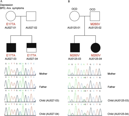 Mutation analysis of RIMS3 identifies two missense variants that segregate with autism and autism related phenotypes. (A) The pedigree for family AU0247 shows that the p.E177A missense variant is present in a patient with autism (AU0247-03), in a sibling with Not Quite Autism (NQA) (AU0247-04), and in the mother who presents with psychiatric symptoms. Chromatograms indicate the presence of the A/C substitution. The SIFT program predicted the p.E177A substitution to be deleterious. (B) The pedigree for family AU0125 shows that the p.M260V missense variant is present in two siblings with autism (AU0125-03 and AU0125-04) as well as in the father who presents with psychiatric symptoms, including obsessive–compulsive disorder (OCD). Chromatograms indicate the presence of the A/G substitution. The variant is not predicted to affect protein function.