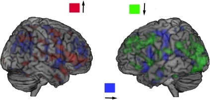 The left-right and top-down projections of the gradients, the intensity of projections coded by colours.The following direction of energy flows in the frontal cortex is detected: the right inferior frontal = >the left inferior frontal = >the triangular part of the left inferior frontal cortex = >the left operculum. The whole range of t-values is used for illustration purposes.